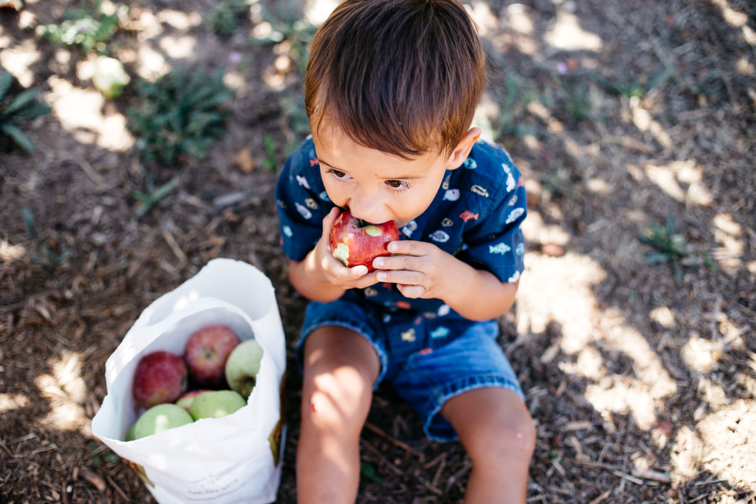 Julian apple picking | San Diego family photographer | www.brittneyvierphotography.com